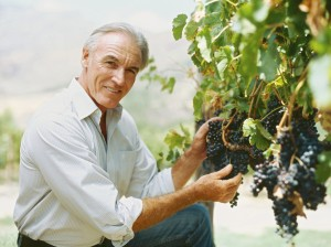 Grapes are a time-honored component of the Mediterranean diet