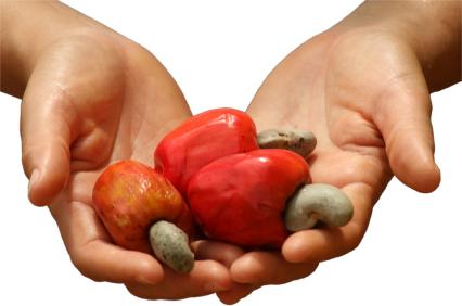 natural cashews, cashew apple