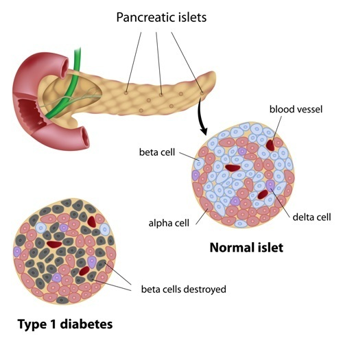 See text for mention of pancreatic alpha and beta cells